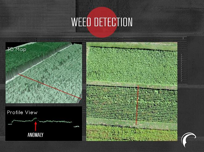 PH_3D_Weed_Detection