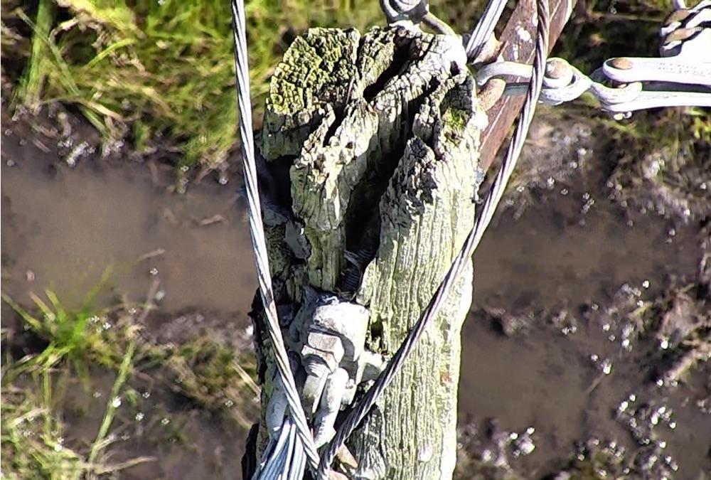 damaged-pole