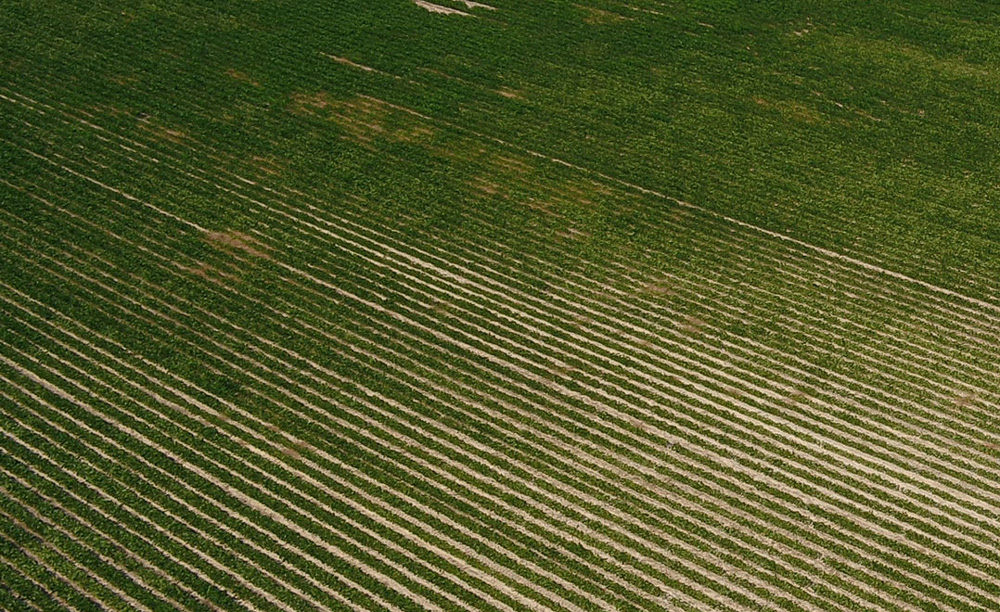 optimized_crops-4