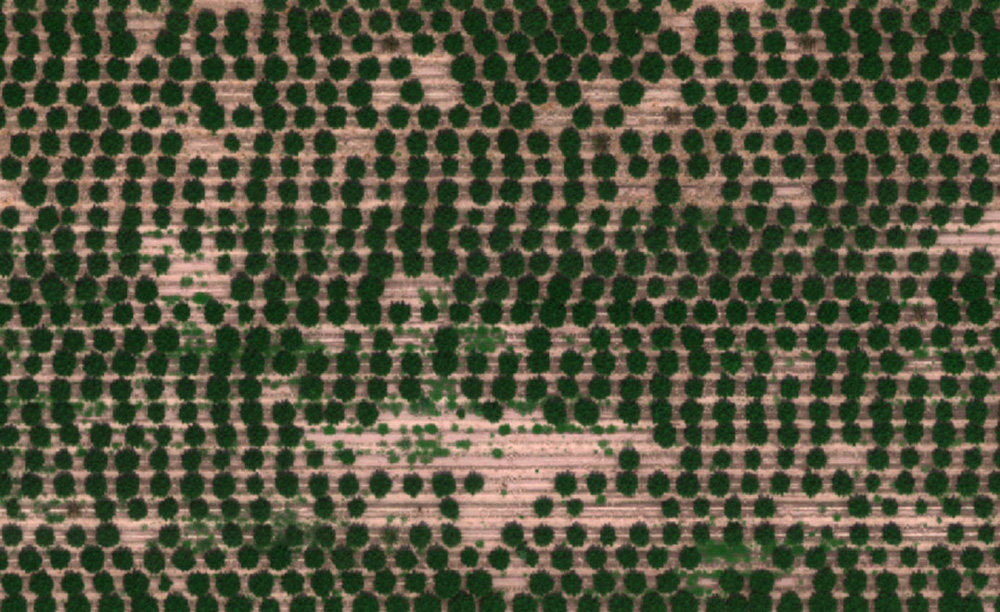 optimized_crops-5