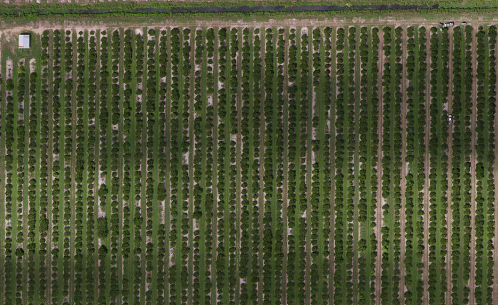 optimized_crops-6